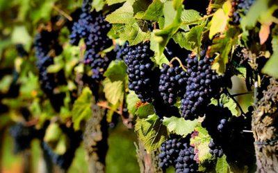 Vitivinicultura y los gases alimentarios incluido el hielo seco