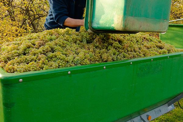 vitivinicultura hielo seco